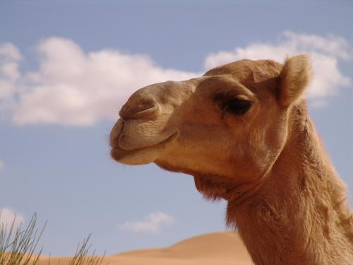 Tour Sahara Libya Nov 2009